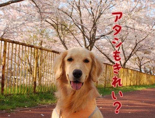 アタシもきれい?.jpg
