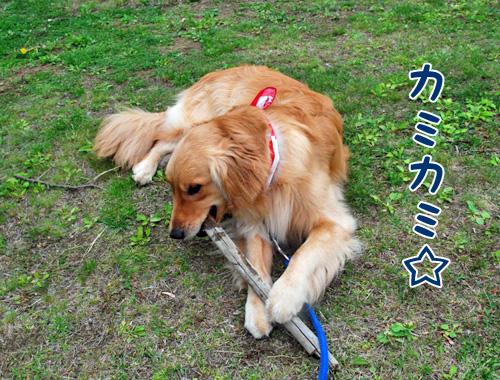 カミカミ☆.jpg