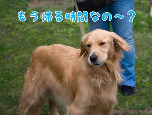 テルくん.jpg