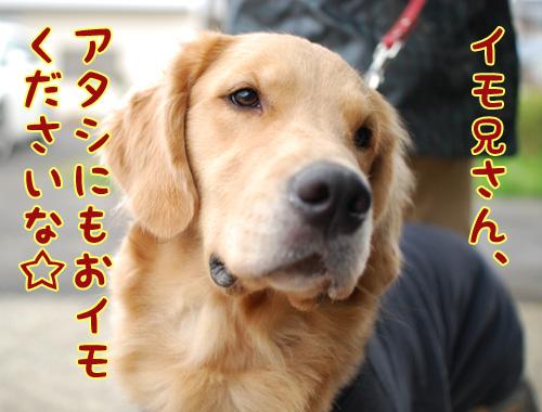 マリィちゃん.jpg