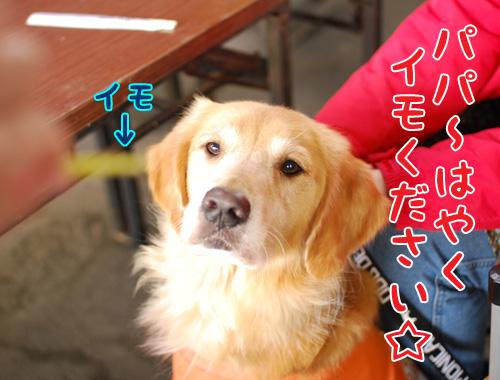 ラピスちゃん.jpg