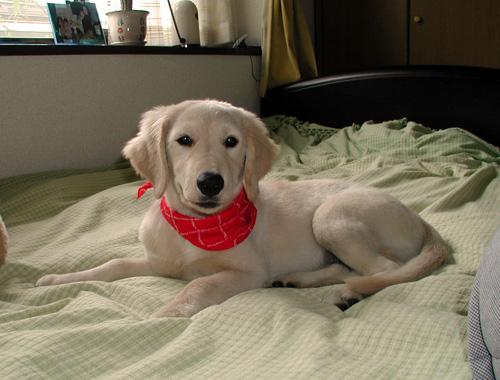 ルナ子犬.jpg