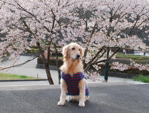 桜とルナ.jpg