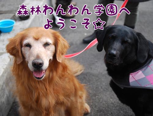 森林わんわん学園.jpg