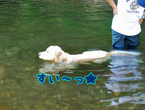 泳ぐマロン.jpg