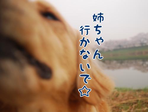 行かないで☆.jpg