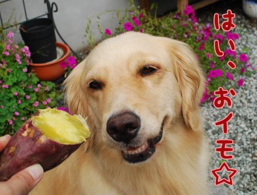 はい、おイモ☆.jpg