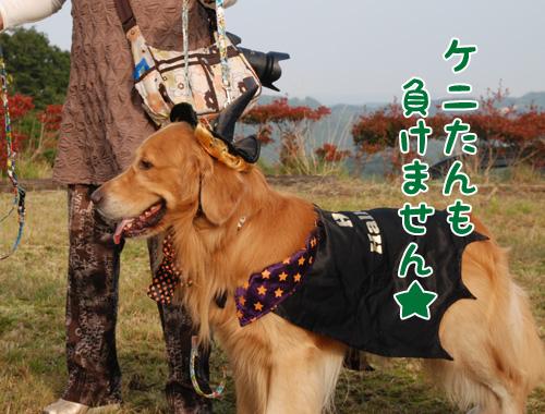 ケニたん.jpg