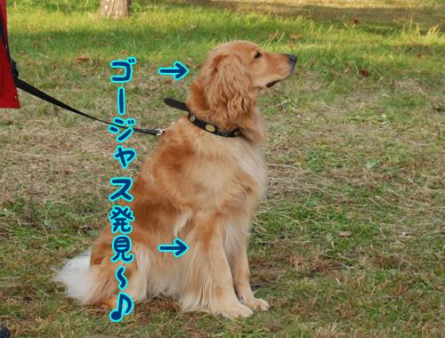 ゴージャス☆ラミー.jpg